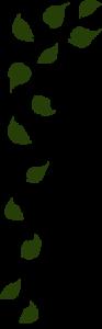top-leaves